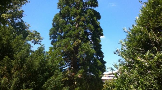 Aménagement d'un massif de plaquette forestière