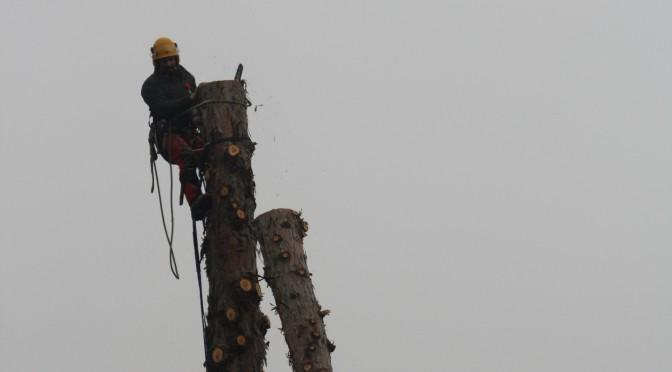 démontage d'un Séquoia